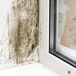 Mold Removal Sandusky, Mold Removal Huron, Mold Removal Findlay